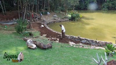 Bizzarri fazendo o acerto de terra no muro de pedra em volta do lago onde vamos fazer a execução do caminho de pedra com cacão de São Tomé e a execução do paisagismo. 20 de fevereiro de 2017.