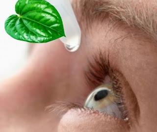 cara menempelkan daun sirih ke mata, cara mengobati mata minus dengan daun sirih merah, cara mengobati mata rabun jauh dengan cara alami, khasiat daun sirih merah untuk mata minus, cara mengobati mata rabun jauh dengan daun sirih, cara mengobati mata minus dengan cepat, cara mengobati mata buram dengan alami, efek samping daun sirih untuk mata