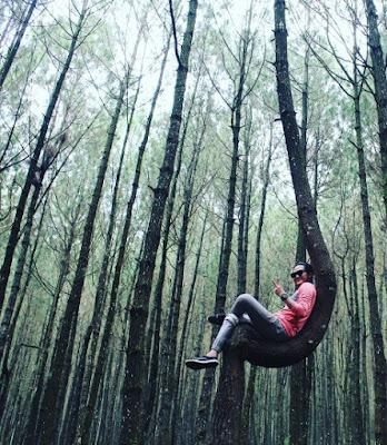 hutan pinus kayon salatiga