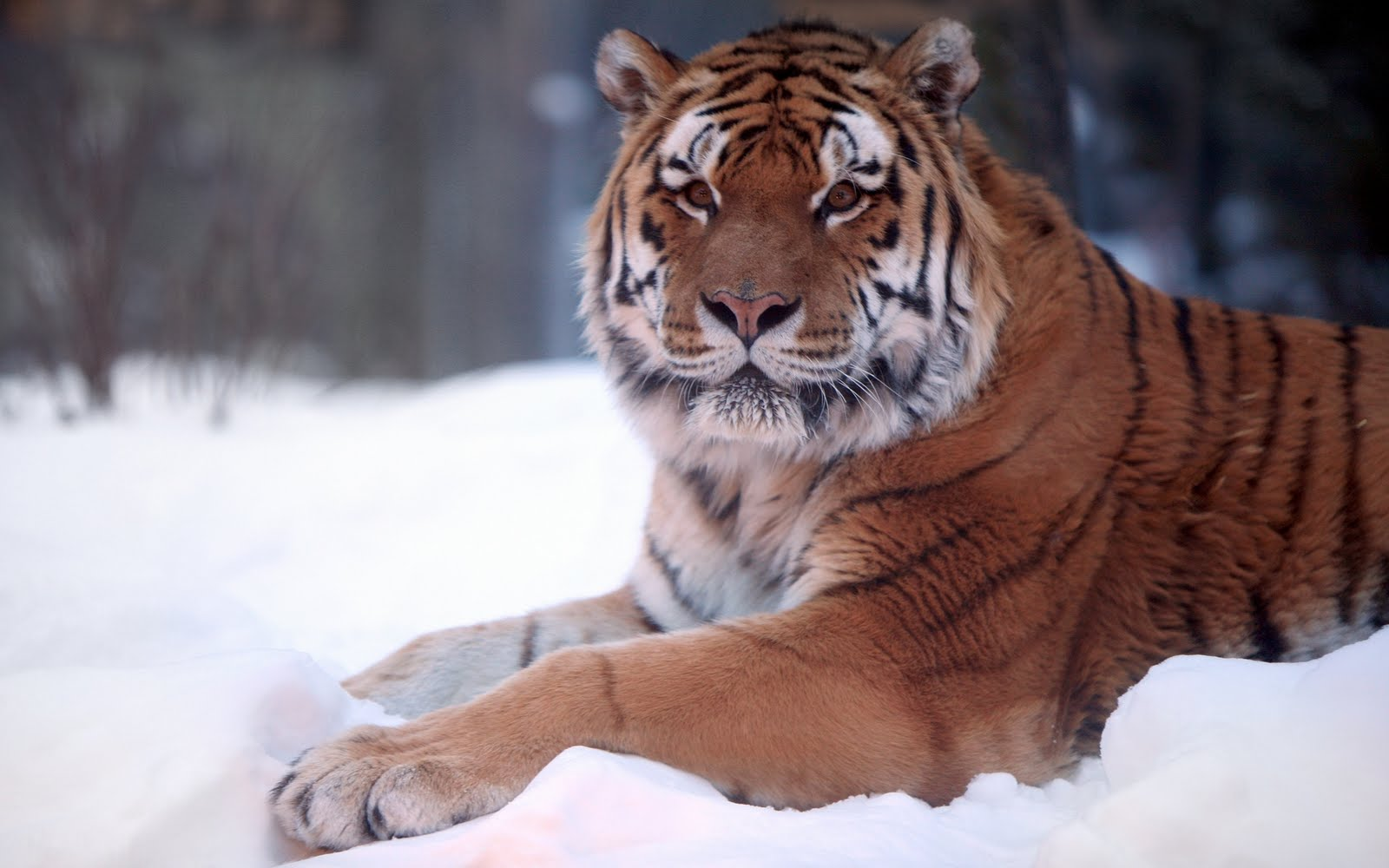Wallpaper Collections Wild Animals Wallpapers