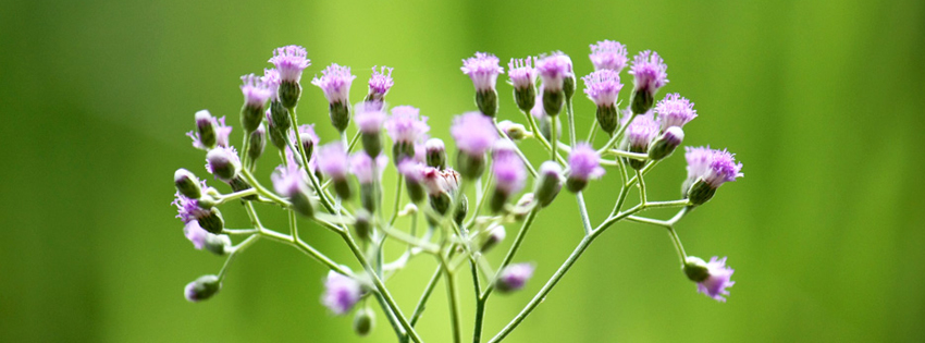 Purple flowers in green background Facebook cover
