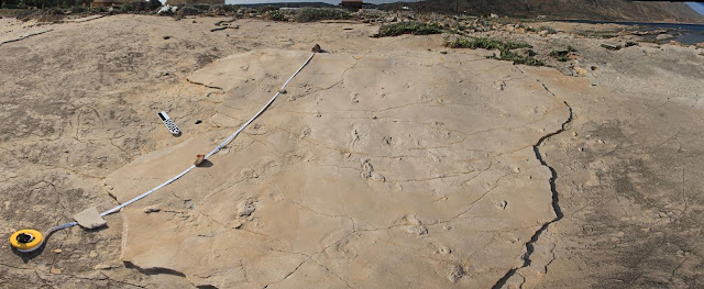 Fossil footprints found on Greek island of Crete challenge established theories of human evolution