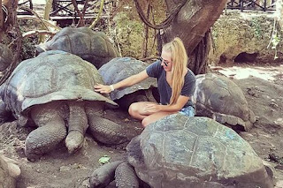 dream about turtles meaning