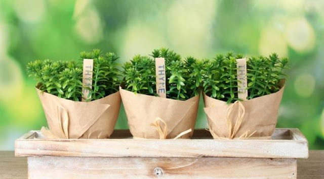 Inilah 5 Obat Herbal Pengusir Dahak dari Tenggorokan