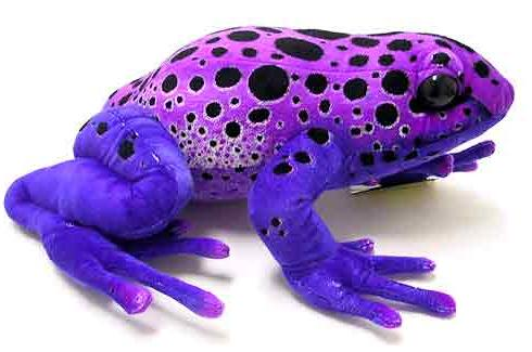 Funny Poison Dart Frog Best Images/Pictures & Photos 2012 ...