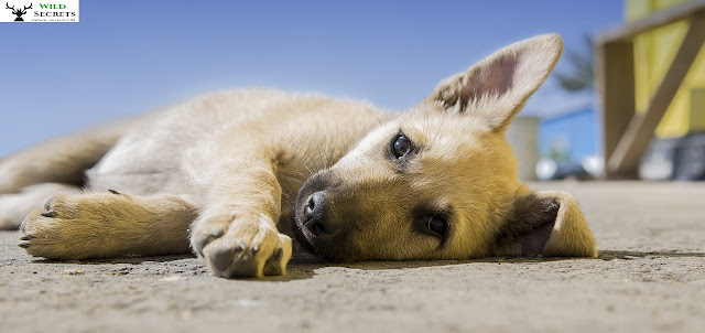 Things You Didn't Know Are Poisonous to Pets !