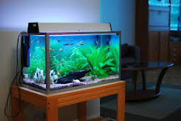 Cara tepat membersihkan Akuarium ikan yang mudah dan praktis