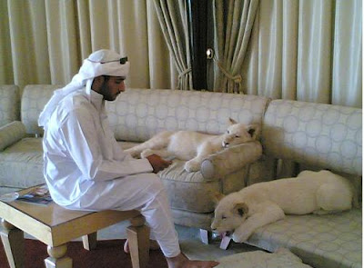 dubai-pets-as-home