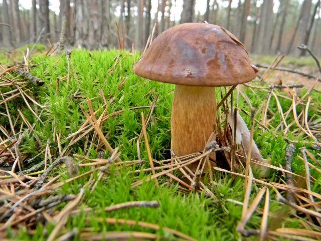 grzyby jadalne, grzyby leśne, gdzie na grzyby?