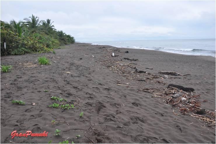 en la paradisíaca playa de Tortuguero está prohibido bañarse. En blog de viajes, Tortuguero, Costa Rica con niños