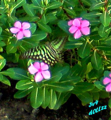 Sayap kupu. Kehijauan Rerumputan dan Dedaunan - Greeny Grasses