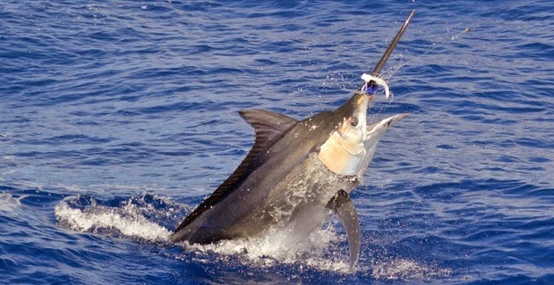 Salam jumpa teman angler semua biar tetap sehat dan semangat dalam melaksanakan acara Umpan Jitu Mancing Ikan Besar Di Laut