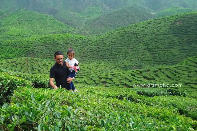 ladang teh cantik, bharat tea plantation, 2 ladang teh wajib dikunjungi, permandangan, cuti-cuti malaysia, tempat wajib dikunjungi cuti sekolah,