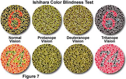 Enchroma Color Blindness App Eyedolatry
