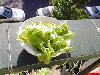 Good Lettuce Harvest