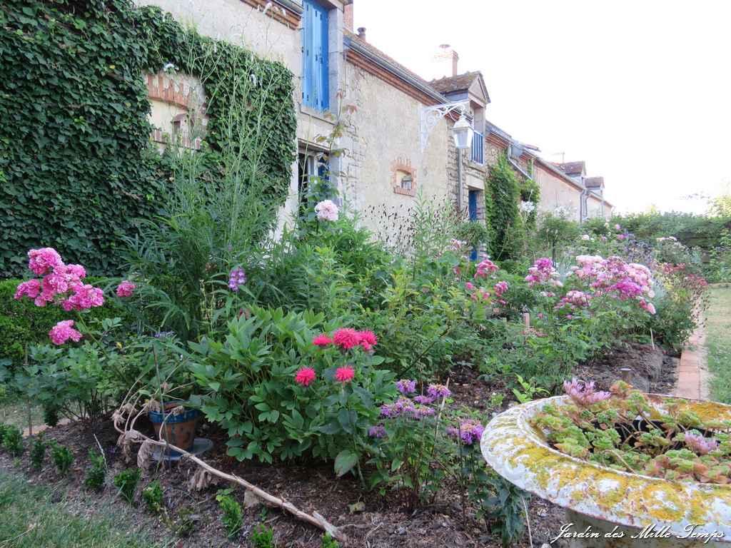R trospective juillet des floraisons foison for Jardin 5 juillet biskra