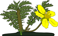 Kumpulan Kosakata Nama Tumbuhan/Tanaman Dalam Bahasa Inggris Disertai Artinya