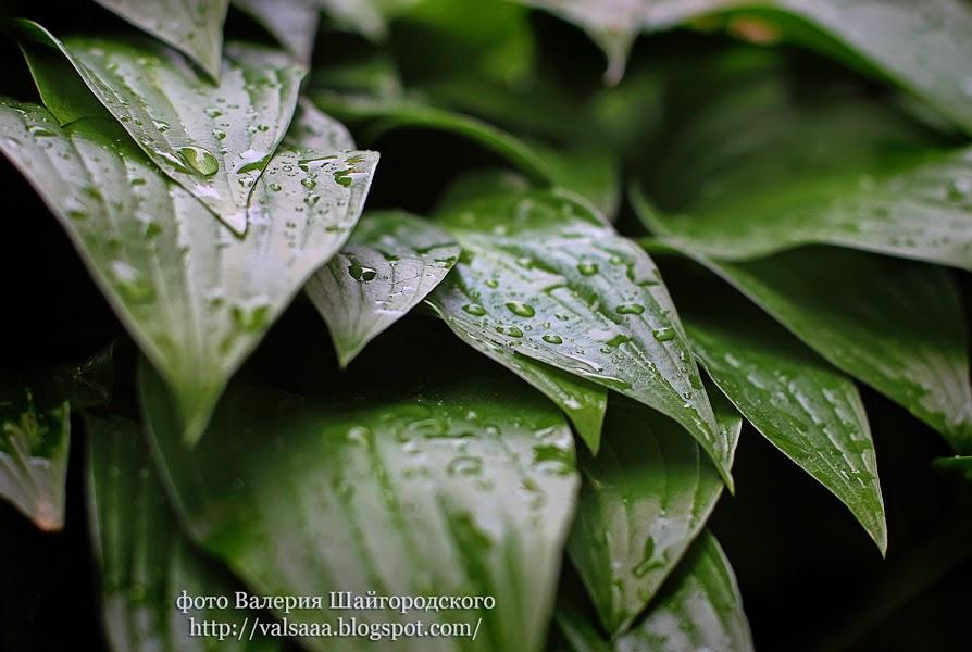 мокрые листья новости