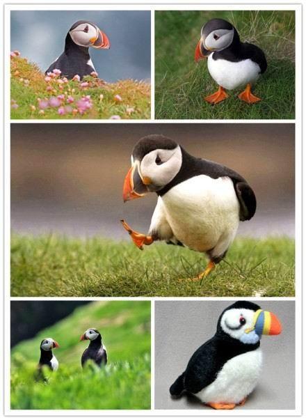 開心瘋人院: 冰島的國鳥Puffin(又叫海鸚或者海鸚鵡)。面部表情常年憂愁萬分。走路的樣子傾倒眾生。一大早 ...