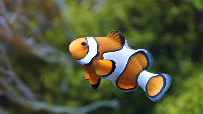 Wallpaper: Exotic fishes from aquarium