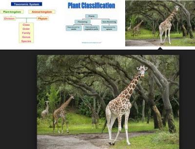 Pembahasan Lengkap Klasifikasi Makhluk Hidup (Kingdom Animalia dan Kingdom Plantae)