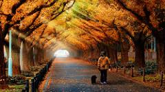Gingko Tree Tunnel, Meiji Jingu Gaien, Tokyo, Japan