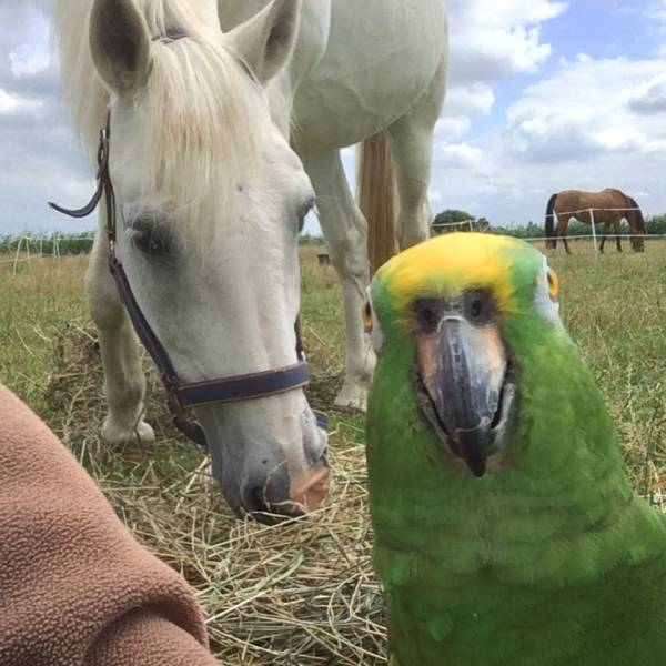 Funny animals of the week - 22 June 2018, funny animals, cute animal image, best photo of animals