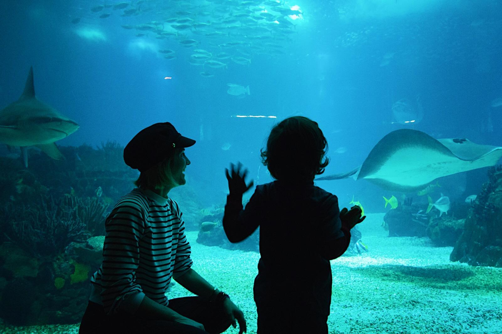 Arte Boheme, Federica Molini, Miami Blogger, Travel Portugal, Portugal aquarium, lisbon aquarium, visit lisbon, Lisboa