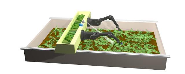 Зачем немцы разрабатывают робота-сборщика огурцов?