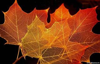 come fare scheletri di foglie fai da te