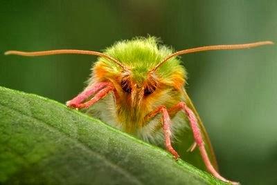 Insectos raros  FOTOS DE INSECTOS RAROS MUY EXOTICOS Y