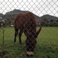 visite aux ânes Saint Jeannet