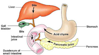 Remedies for Gerd and Bile Reflux Treatment