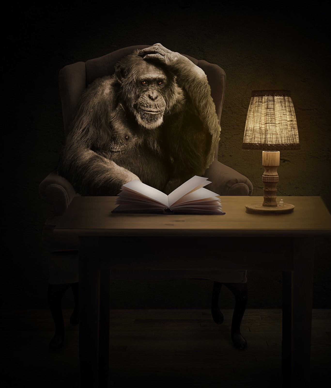 A chimpanzee reading a book.