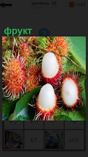 1100 слов растут плоды экзотического фрукта 30 уровень