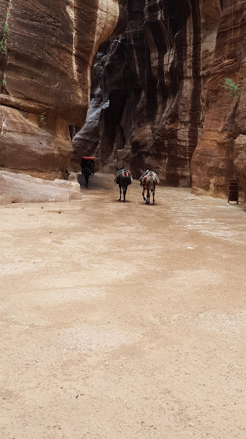 Asnos, burros, Petra, Jordania, Jordan, Elisa N, Blog de Viajes Argentina