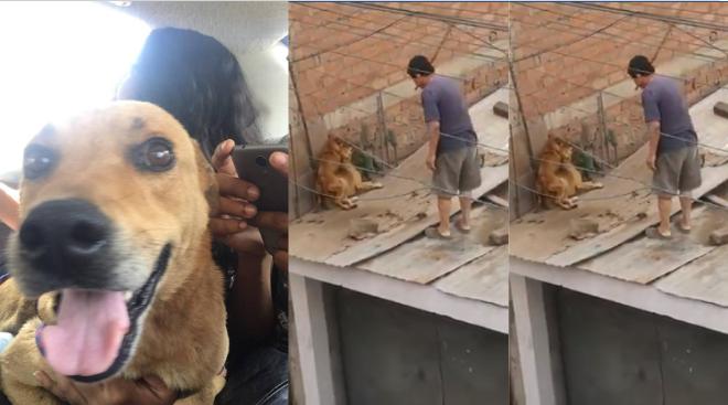 Perritos golpeados salvajemente por su dueño fueron rescatados  VÍDEOS Y FOTO