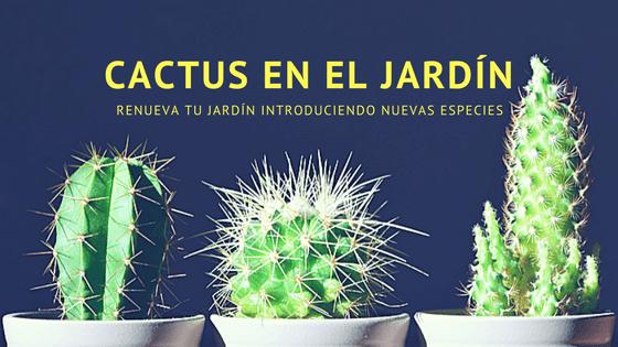 introduce cactus en el jardín