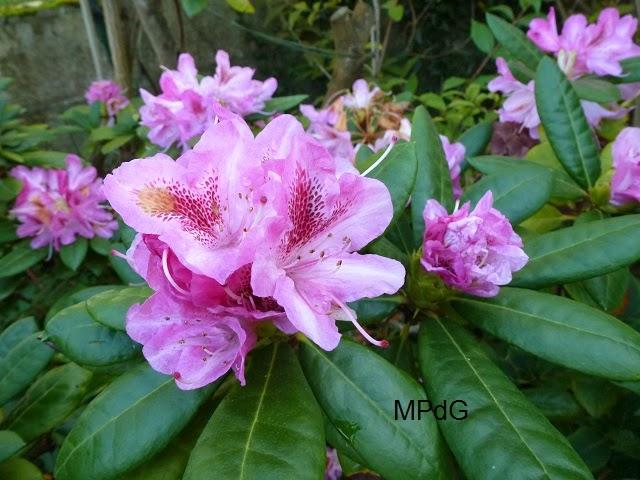 mon herbier des fleurs
