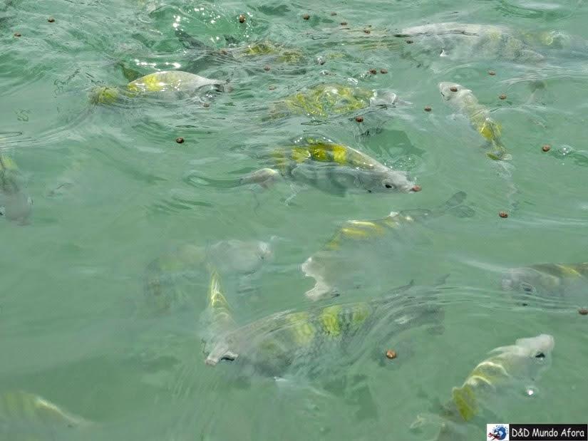 O que fazer em porto de galinhas - piscinas naturais