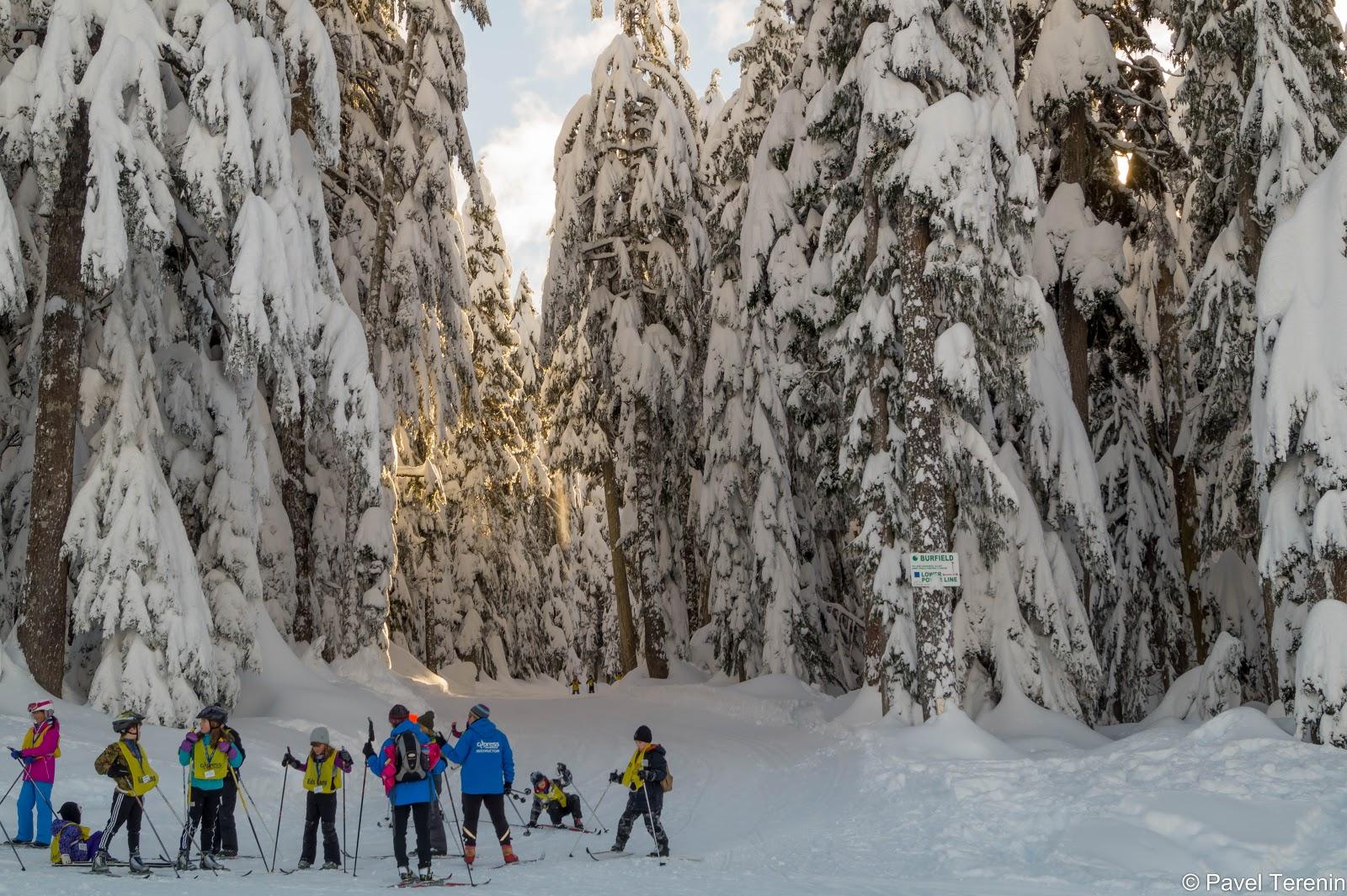 Поднявшись на гору и отстояв очередь за снегоступами, мы наконец-то оказались в снежном сказочном лесу