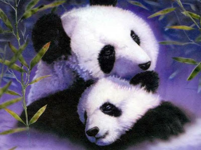Happy Birthday Animated Wallpaper Animals Wallpapers Play Feed The Panda Cool Puzzle