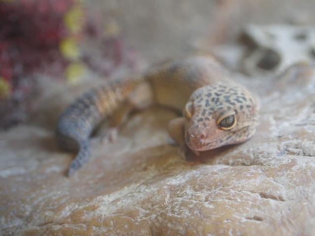 Godstone Farm, Surrey Review - lizard