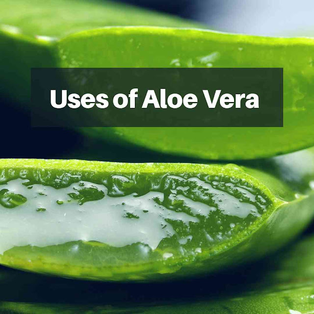 This is a picture representing aloe Vera