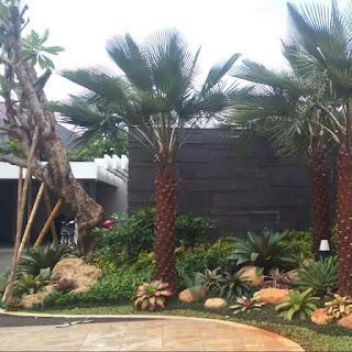 Tukang Taman Green Cove Bsd | Jasa Tukang Taman