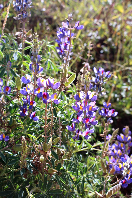Purple flowers in Cusco, Peru - lifestyle & travel blog
