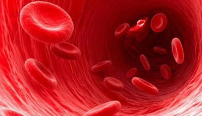 Teh Terhadap Sel Darah Merah