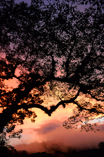 colorful sunset through tree