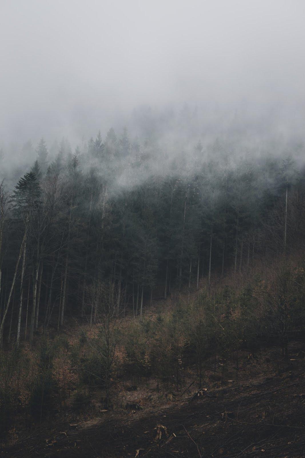 غابة خضراء مع ضباب كثيف - خلفيات ايفون X
