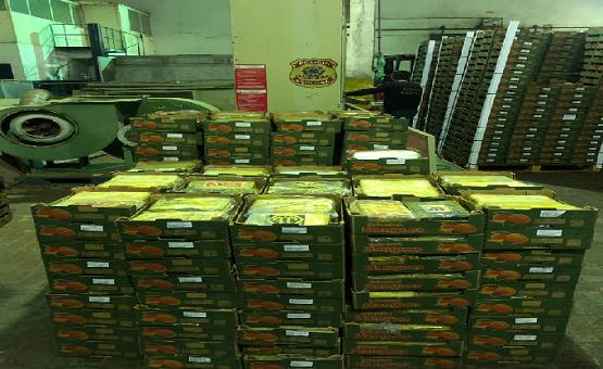 Resultado de imagem para PF apreende no Porto de Natal 1,2 tonelada de cocaína em meio a frutas que iriam para a Europa